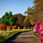 gray-concrete-pathway-besides-pink-flower-during-day-158028